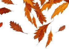 落的叶子 免版税图库摄影