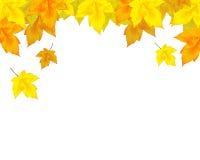 落的叶子 向量例证