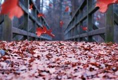 落的叶子 库存照片