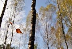 落的叶子 图库摄影