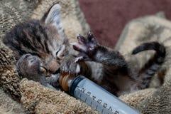 落的小猫休眠 库存照片
