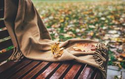 落的槭树叶子在羊毛围巾fogorten在长凳在公园 免版税库存图片