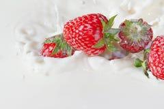落的牛奶红色飞溅草莓 免版税库存照片