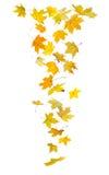 落的秋叶 免版税库存照片