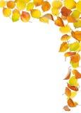 落的秋叶 库存图片