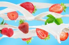 落的草莓用牛奶在蓝色背景飞溅 库存照片