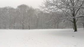 落的雪在一个森林里在荷兰 股票视频