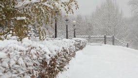 落的雪花,降雪 横向风景冬天 结构树和雪 股票录像