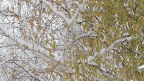 落的雪花,降雪 横向风景冬天 结构树和雪 股票视频