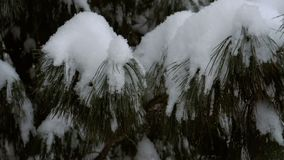 落的雪,慢动作 影视素材