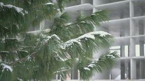 落的雪,慢动作 股票录像