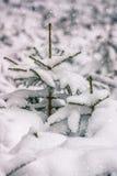 落的雪 图库摄影