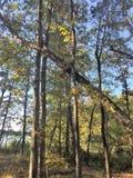落的结构树 免版税库存图片