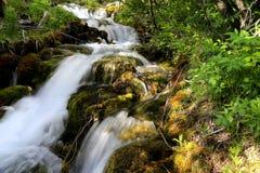 落矶山脉森林小瀑布 免版税图库摄影