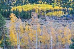 落矶山脉秋天对比 免版税库存图片