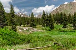 落矶山脉风景-树和山在14,000英尺 图库摄影