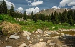 落矶山脉风景-树和山在14,000英尺 免版税图库摄影