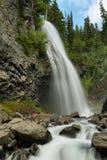 落更加多雨mt narada的国家公园 结构树和草 库存图片