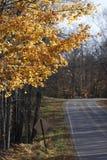 落从在晚秋天的树的多片叶子沿森林公路 免版税库存照片