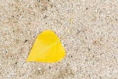 落从在沙子的一棵树的黄色叶子 库存照片