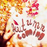 落离开在风景树在阳光与文本秋天来 免版税图库摄影