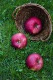 落从柳条筐的成熟湿苹果特写镜头视图  库存图片
