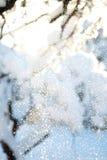 落从树枝的闪耀的雪特写镜头在日出& x28由后照的一个冷的冬天早晨; 浅 免版税图库摄影