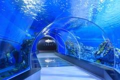 著名全国水族馆丹麦的内部看法Copenha 免版税图库摄影