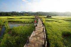 著名农村绿色米领域和竹桥梁 免版税库存图片