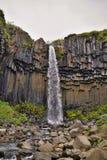 著名冰岛瀑布Svartifoss在南冰岛 免版税库存图片