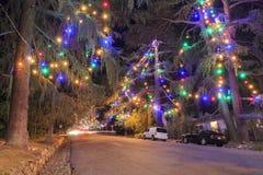 著名圣诞树车道 库存图片