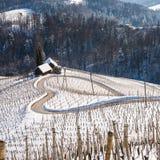 著名心形的酒路在斯洛文尼亚在冬天, 免版税库存照片