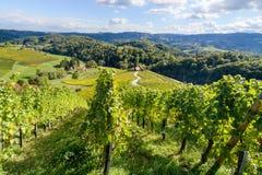 著名心形的酒路在斯洛文尼亚,在马里博尔附近的葡萄园 图库摄影