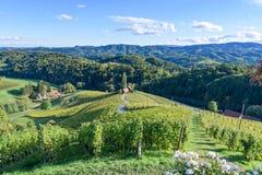 著名心形的酒路在斯洛文尼亚,在马里博尔附近的葡萄园 库存图片