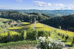 著名心形的酒路在斯洛文尼亚,在马里博尔附近的葡萄园 库存照片
