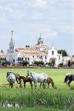 著名朝圣教会El Rocio和野马 免版税库存图片