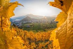 著名葡萄园在瓦豪,波美丝毛狗,奥地利 免版税图库摄影