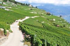 著名葡萄园在Lavaux地区,瑞士 免版税库存图片