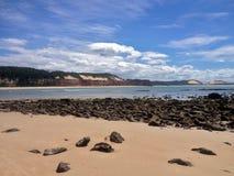 著名负子蟾海滩的看法-网的 免版税图库摄影