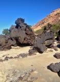 著名负子蟾海滩的看法-网的 库存图片