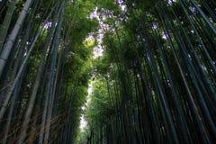 著名Arashiyama竹树丛,日本 免版税库存图片