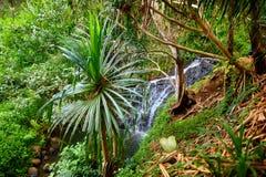 著名Kalalau足迹的看法沿考艾岛海岛的Na梵语海岸的  免版税库存图片