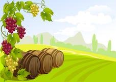 葡萄、桶和农村风景 免版税库存图片