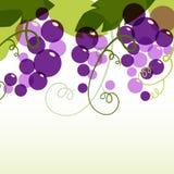 葡萄分支与叶子的 抽象传染媒介背景设计t 免版税库存图片