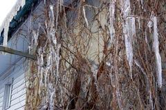 葡萄分支在冰柱的 库存照片