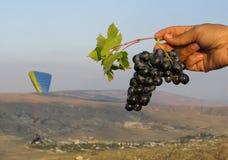 葡萄分支在手中在背景滑翔伞 免版税库存图片