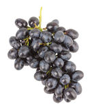 葡萄分支在白色背景的 图库摄影