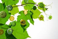 葡萄叶子和按钮在白色背景 图库摄影