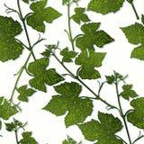 葡萄叶子装饰无缝的样式分支  免版税图库摄影