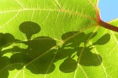 葡萄叶子 库存照片